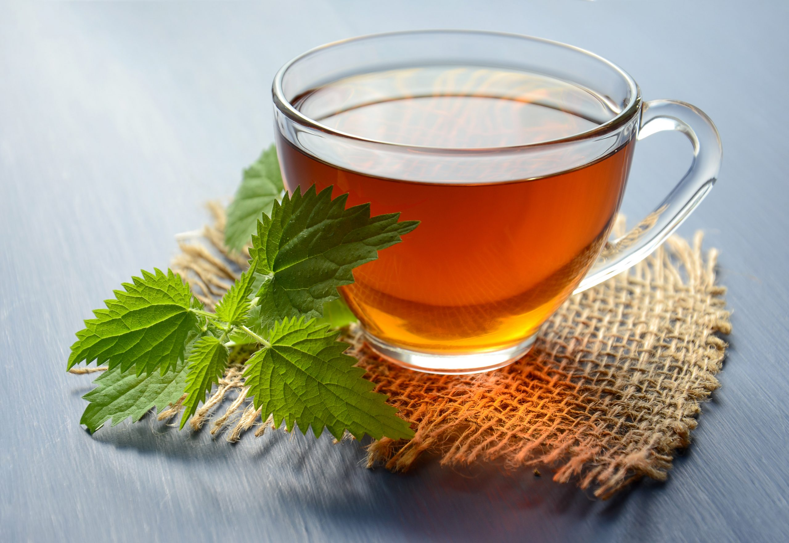 Mint during pregnancy: benefit or harm